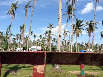 地元の主産業であるココナッツも大打撃を受け、経済的影響も懸念されます