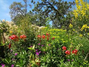 咲き誇る夏の花々